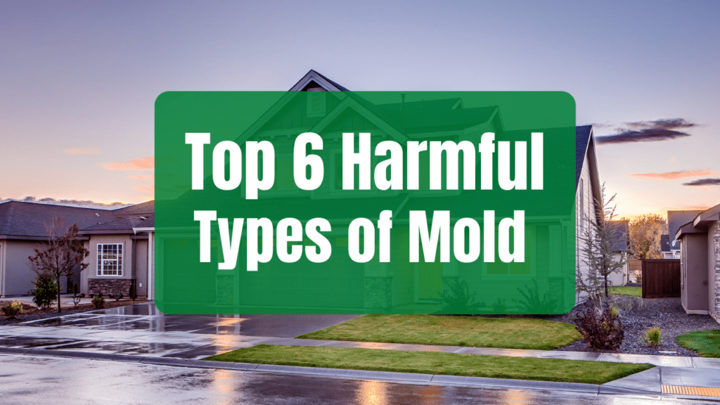 harmful types of mold in home