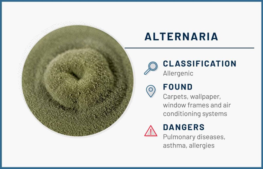 alternaria mold in home